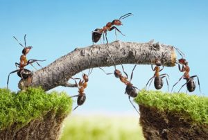 pôle BI Teamwork Management